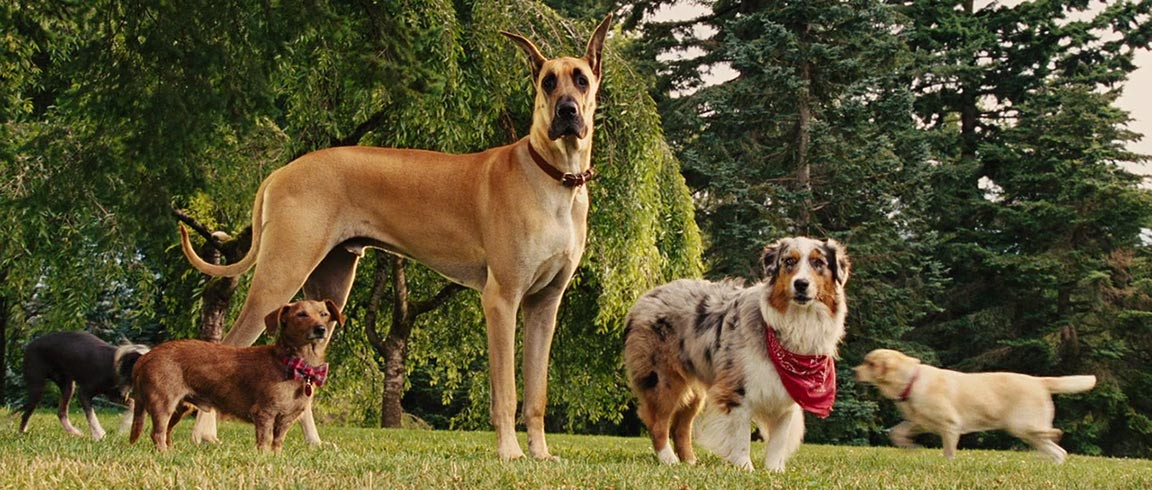Marmaduke Trailer Screencap