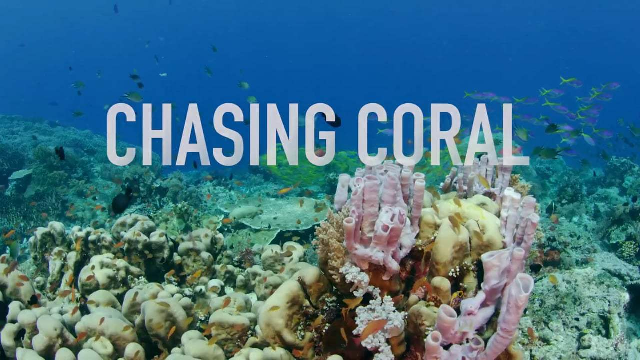 Chasing Coral Trailer (2017) Screen Capture