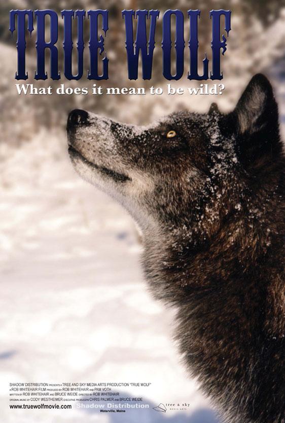 True Wolf Poster #1