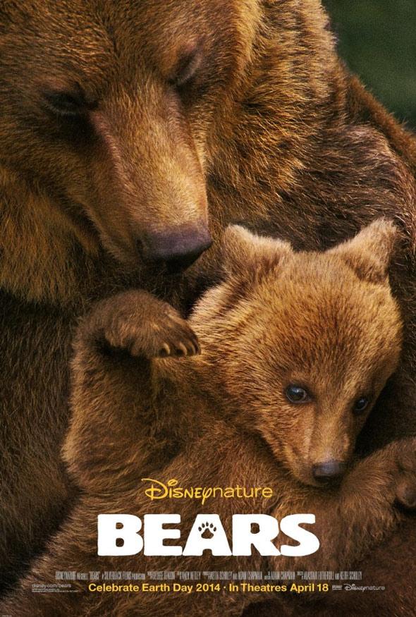 Bears Poster #1