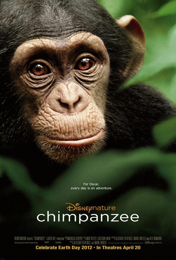 Chimpanzee Poster #1