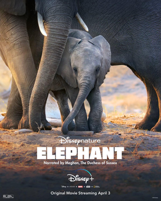 Elephant Poster #1