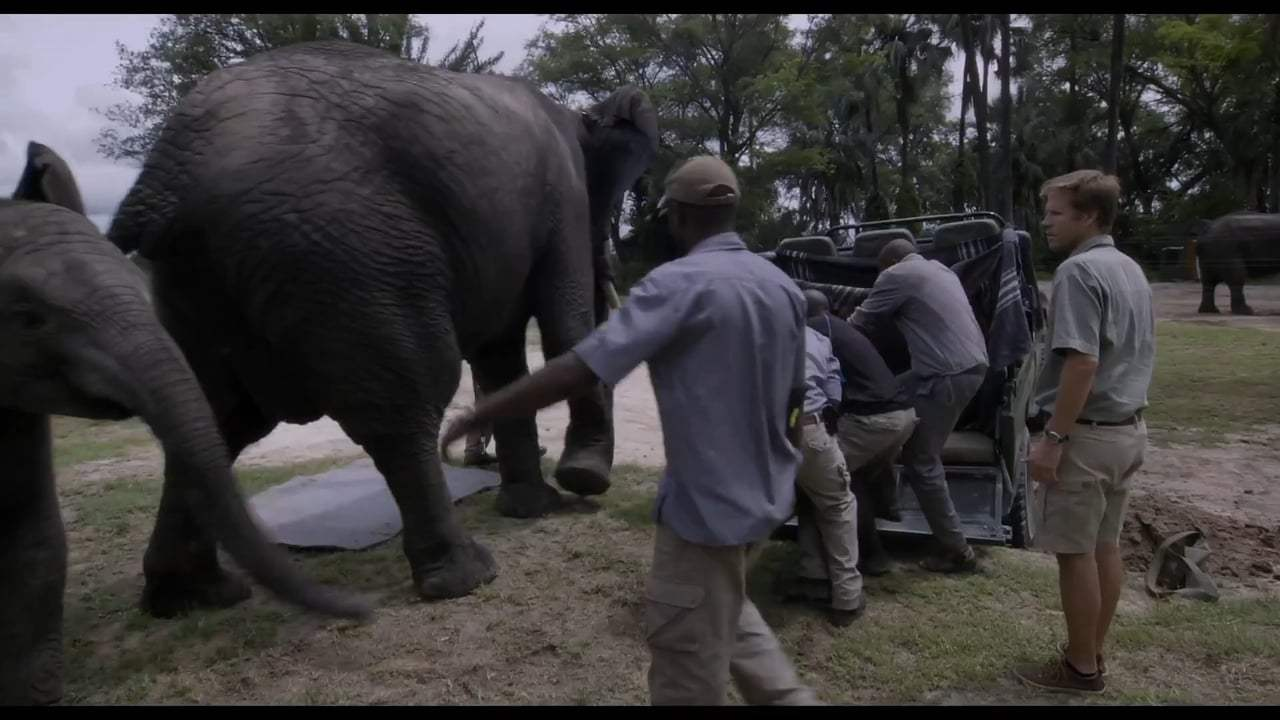 Naledi: A Baby Elephant's Tale Trailer (2017) Screen Capture #3