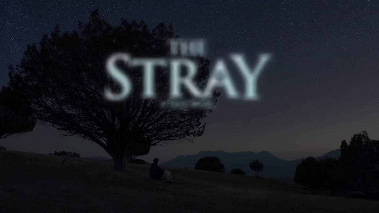 The Stray Trailer (2017) Screen Capture #4