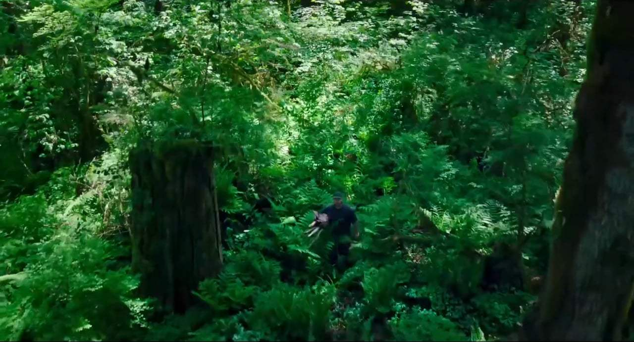 Leave No Trace Trailer (2018) Screen Capture #1
