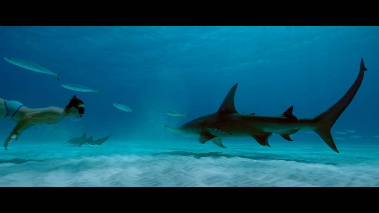 Sharkwater Extinction Trailer (2018) Screen Capture #1