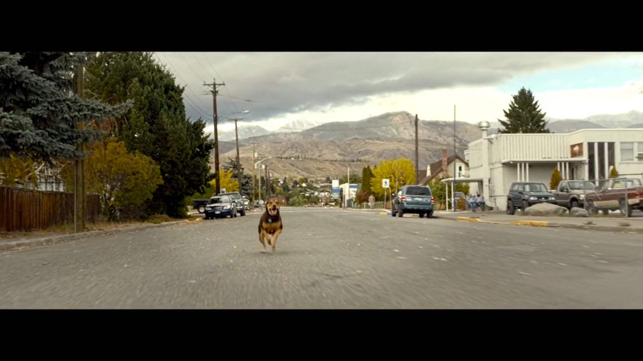 A Dog's Way Home Featurette - Finding Bella (2019) Screen Capture #1