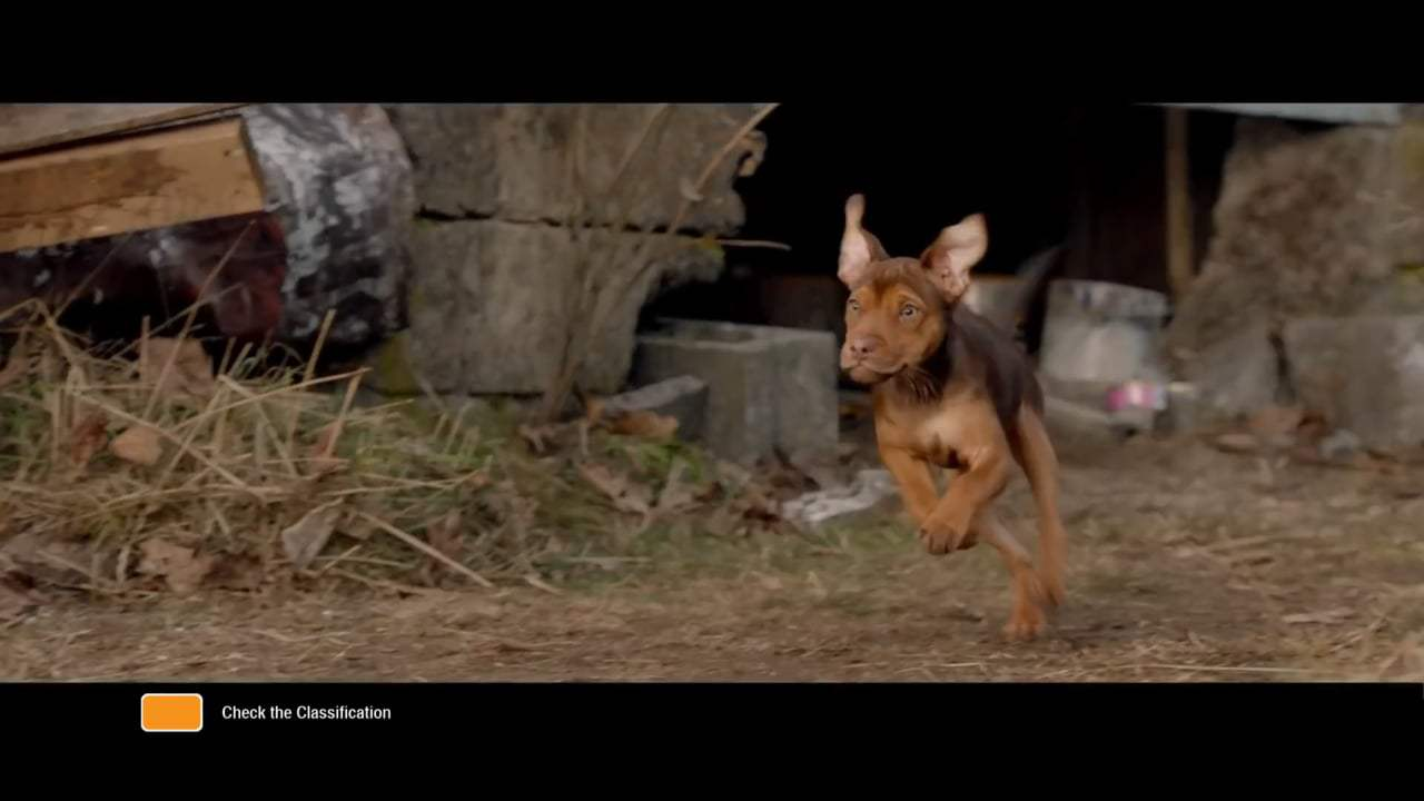 A Dog's Way Home International Trailer (2019) Screen Capture #1