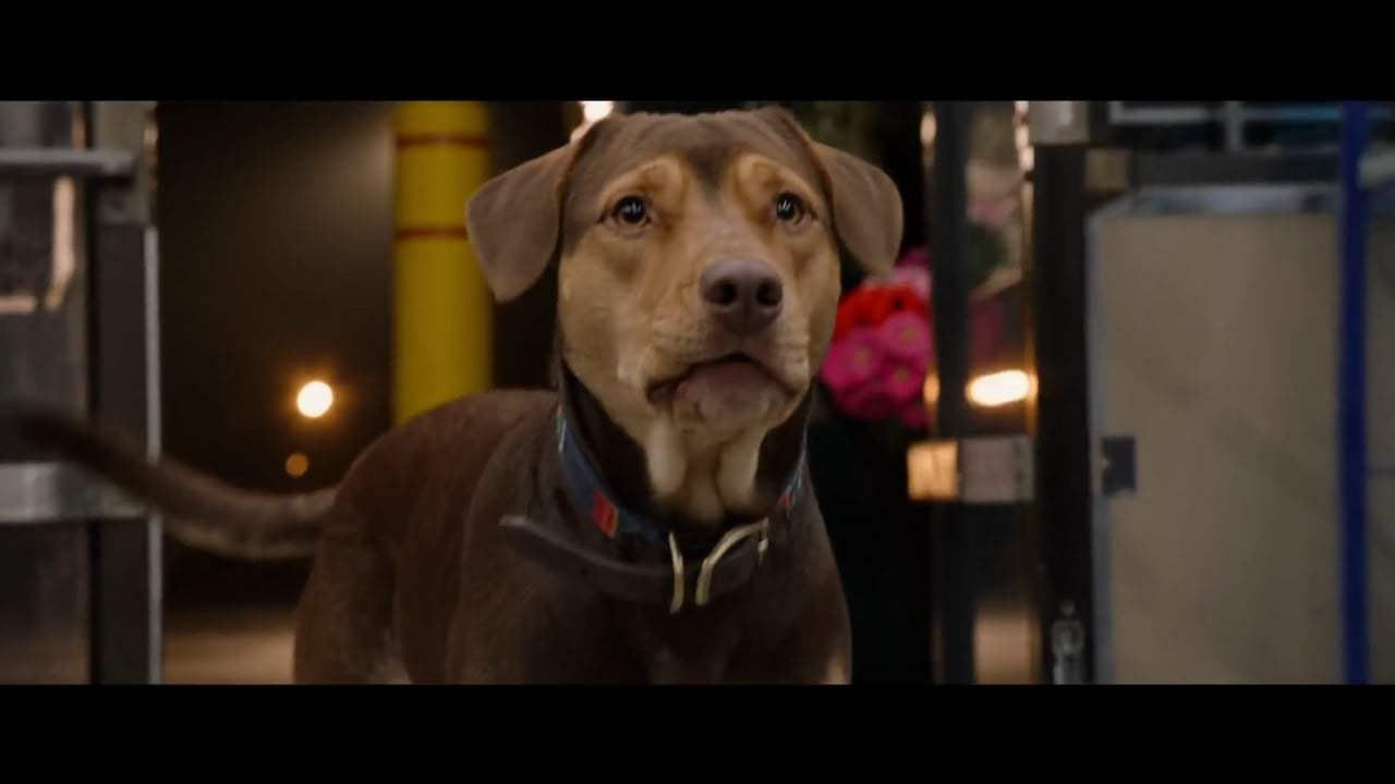 A Dog's Way Home International Trailer (2019) Screen Capture #3