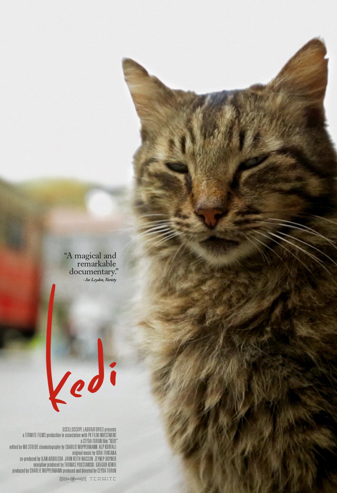 Kedi Poster #1