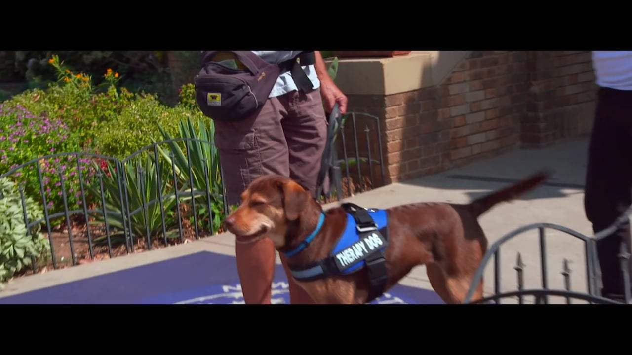 A Dog's Way Home Featurette - Finding Bella (2019)