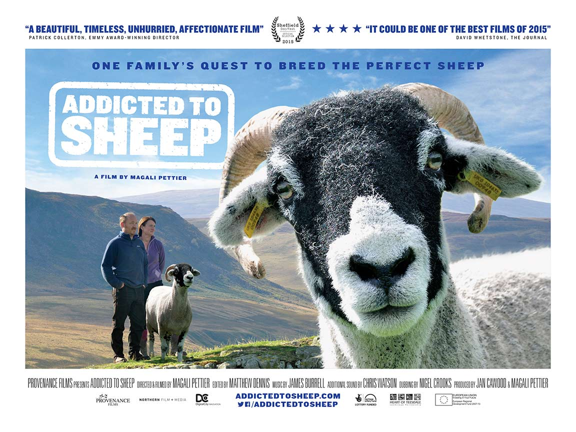 Addicted to Sheep Poster #1