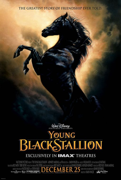 Young Black Stallion Poster #1