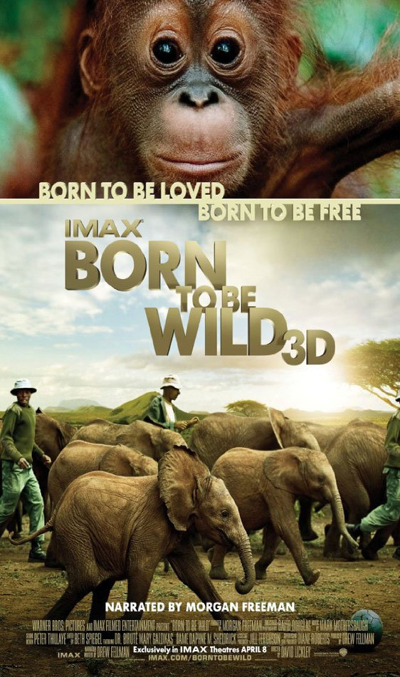 Born to be Wild Poster #1