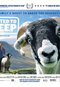 Addicted to Sheep (2015) Poster #1 Thumbnail
