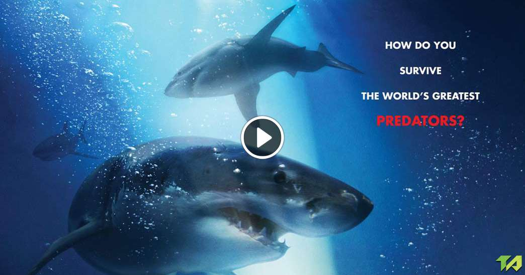 47 Meters Down Theatrical Trailer 2017