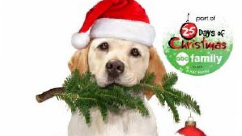 The Dog Who Saved Christmas.The Dog Who Saved Christmas 2009 Traileraddict